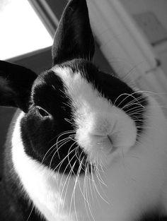 precious rabbit face