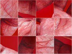 Flesh and Bites from Edie Nadelhaft: Edie-Nadelhaft_08.jpg