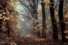 -Angels alongside our path- by Janek-Sedlar on DeviantArt