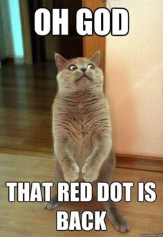 I bet buckwheat thinks this every time we pull the laser pointer out!