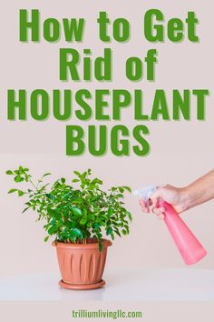 Learn how to get rid of houseplant bugs! This article gives you easy-to-follow instructions for how to eliminate bugs on your beloved plant babies. Clear descriptions and photos will also make it easy to identify fungus gnats, mealybugs, aphids, and whiteflies. Indoor Gardening Supplies, Container Gardening, House Plant Care, House Plants, Gardening For Beginners, Gardening Tips, Outdoor Plants, Outdoor Gardens, Get Rid Of Aphids
