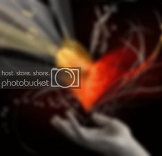 Love You Gif, Cool Websites, Art Photography, Prints, Fine Art Photography, Artistic Photography
