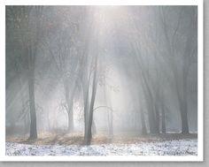 Oaks, Mist, Melting Snow, Yosemite (Charles Cramer)