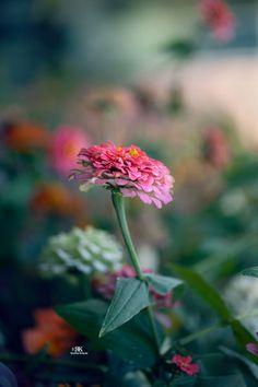 closeup flower image Flower Images, Zinnias, Close Up, Garden, Flowers, Plants, Garten, Flora, Plant