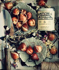 November garden:  plant bulbs