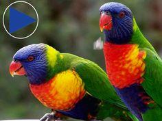 Australia and Islands Aviary Exhibit at the Columbus Zoo