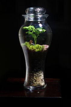 Tall Urn Terrarium  A man and his dog stand under a green tree: