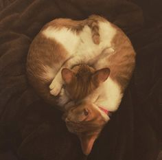 My twin cats cuddling together in the shape of a heart. http://ift.tt/2ySeXej