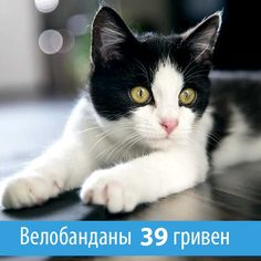 Велобанданы по 39 гривен с доставкой по Украине Cats, Animals, Gatos, Animaux, Animales, Cat, Kitty, Animal, Dieren