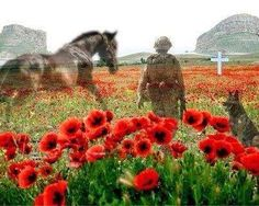 Armistice Day - the eleventh hour of the eleventh day of the eleventh month of Lest we forget. Remembering all the horses and dogs who have given their lives in times of war. Remembrance Day Images, Remembrance Day Poppy, Lest We Forget Anzac, Armistice Day, Flanders Field, Horses And Dogs, War Horses, Horse Horse, World War One