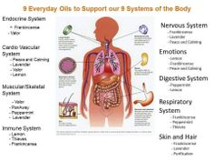 Young Living Essential Oils: Everyday Oils for the Body