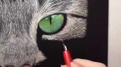 Incredible Tabby Cat Scratch Board Speed Drawing - YouTube