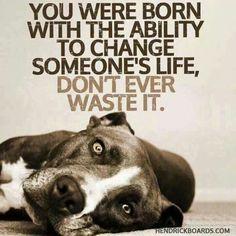 #rescue #adopt #pitbulllove