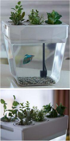 Self Cleaning & Feeding Fish Tank
