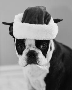 Puppy Santa by C_Gara~♛