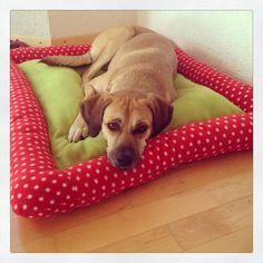 Ohuhah ♥ wir haben gerade einen ganz süßen Pflegehund, die Sally, wir sind ganz verzückt : )   Da wir Sally unmöglich das Kissen unserer ver...