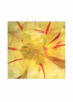 Silk Square Scarf - Flowers by VIDA VIDA Y5WbEHK1