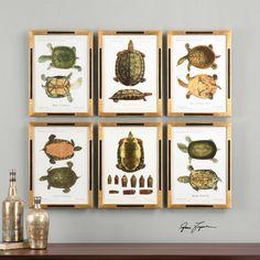 Set of Six Tortoise Study Prints Wall Art