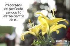 MI corazón es perfecto porque tú estás dentro de él... #frases #MarcoLeonFotografia