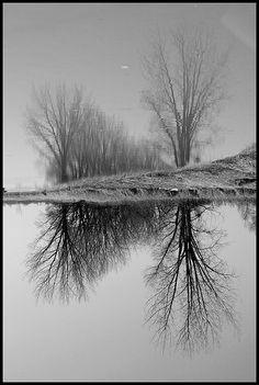 Dramatic Black & White Trees