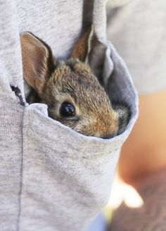 Pocket bunny / Rabbit / Adorable and Cute Animals Cute Baby Animals, Animals And Pets, Funny Animals, Wild Animals, Baby Bunnies, Cute Bunny, Bunny Rabbits, Bunny Bunny, Easter Bunny