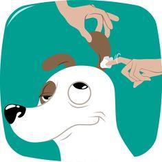 bien-etre-chien-nettoyage