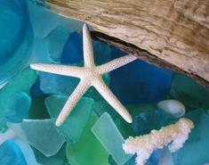 sea star with sea glass
