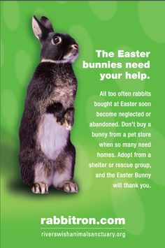 Coming soon to a shelter near you - all the Easter bunnies people never wanted in the first place.  Adopt.