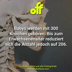 45 geniale Fakten über Babys - Only Fun Facts Wisconsin, Trivia, Fun Facts, Amniotic Fluid, Black Babies, Mom Cake, Some Amazing Facts, Baby Grows, Quizes