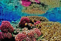 Hope for Coral Reefs in Crisis Ocean Photos, 6 Photos, Underwater Pictures, Bali, Coral Bleaching, Famous Beaches, Historical Monuments, Beaches In The World, Lab