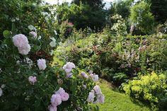 Das Sommer-Bild verdanken wir dem Rosengarten im Fichtelgebirge.