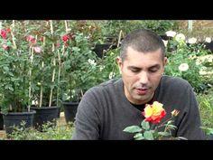 Faça um repelente caseiro contra pragas do jardim - YouTube