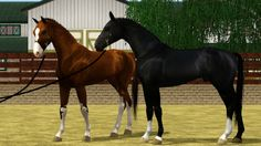 Sims 3 Horse Breeds | RESULTS] [T:A] EBA's First Annual Breeder's Showcase