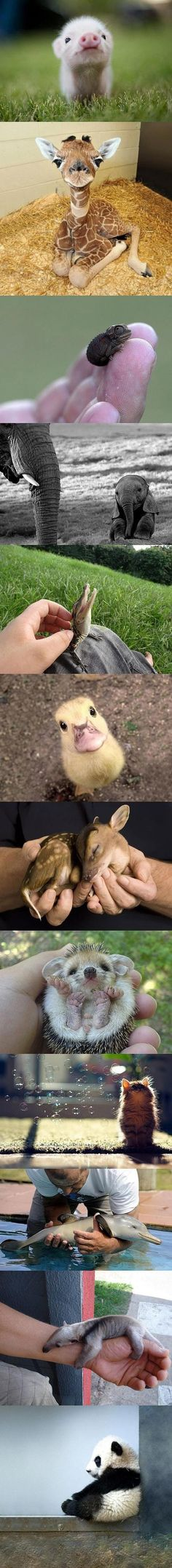 Aww! Super Tiny Baby Animals originally pinned via http://pinterest.com/alararox/