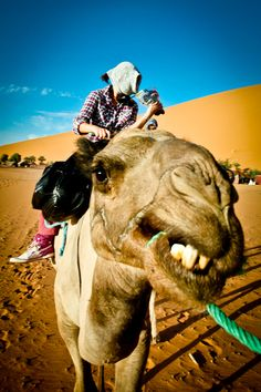 Camel Face - Sahara Desert - Morocco