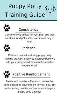 How To Potty Train A Boxer Puppy. In general, large pet breeds such as the Boxer are simpler to potty train than smaller canines. How to potty train a. Puppy Potty Training Tips, Training Your Dog, Agility Training, Training Collar, Dog Minding, Positive Reinforcement, How To Train Your, Easy, Happy Puppy