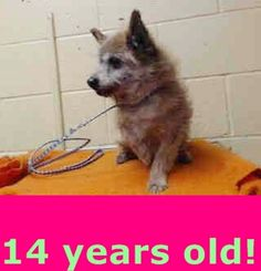 14 YEAR OLD NEEDS PLEDGES AND RESCUE! A4790590 I don't have a name yet and I'm an approximately 14 year old male terrier. I am already neutered. I have been at the Downey Animal Care Center since January 9, 2015. I will be available on January 13, 2015. You can visit me at my temporary home at D702. https://www.facebook.com/photo.php?fbid=794734753940192&set=a.621812584565744&type=3&theater