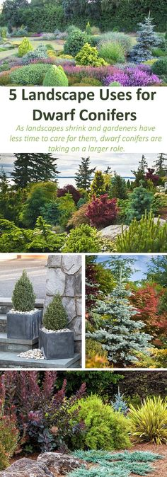 Dwarf Conifers Offer Big Solutions Dwarf conifers can serve as versatile plants regardless of how much space you have. Selecting and designing with these plants is all about intent. Landscaping With Rocks, Outdoor Landscaping, Landscaping Plants, Front Yard Landscaping, Outdoor Gardens, Landscaping Borders, Garden Borders, Landscaping Ideas, Landscaping Melbourne