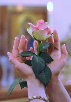 A imagem pode conter: planta, flor e natureza