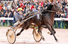 Harpers Hanover : Bird Parker bat le record de l'épreuve ! Bird Parker, Horses, Animals, Animales, Animaux, Animal, Animais, Horse