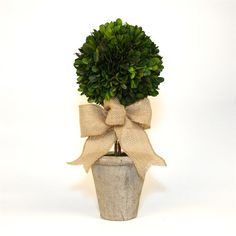 Preserved Boxwood Single Ball Topiary - 16 Inch - Burlap Bow - Natural