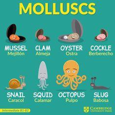 Mollucs