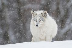 That's Winter... by djlparent99 #animals #animal #pet #pets #animales #animallovers #photooftheday #amazing #picoftheday