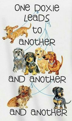 Must do this with pictures of my dachsies from 1963 to today. Dachshund Clube