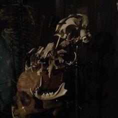 Exploded domestic cat skull. #explodedskull #beaucheneskull #beauchene ...