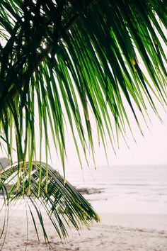 Palm trees lulled by the wind off the coast of a Costa Rica beach