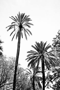 Tropical palm trees in black and white