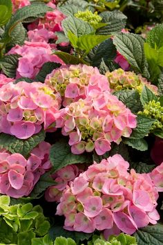 Count on these striking plants to create eye-catching focal points in pots.