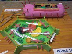 Maqueta celulas