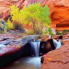 """""""Swiss Cheese Falls, that's what this place is called. Some might say I was too early for the fall colors, but I would disagree. I love the transitioning from green to yellow and I find it makes the photo more interesting.  Taken late October, 2014 in Coyote Gulch, Escalante, Utah with @dustinlefevre"""" Photo taken by @ienjoyhiking on Instagram, pinned via the InstaPin iOS App! http://www.instapinapp.com (11/12/2015)"""